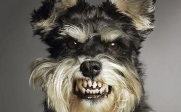 dicas_entendendo_a_agressividade_canina