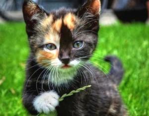 gatos_para_adocao_8