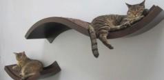 Gatos Precisam de altura