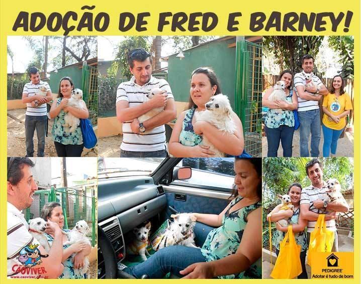 Fred e Barney adotados 1