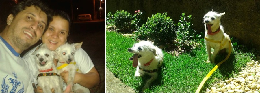 Fred e Barney adotados 2