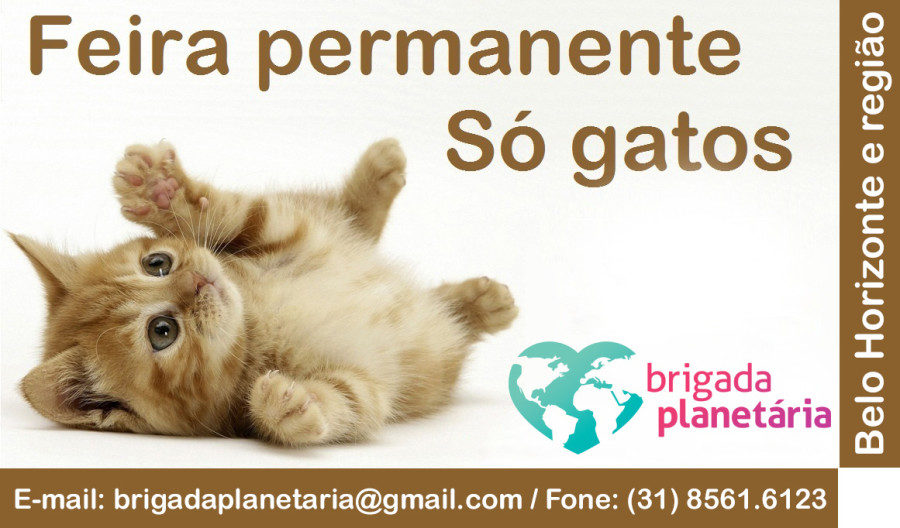 Feria-permanente-so-gatos-Brigada-Planetaria3-900x528