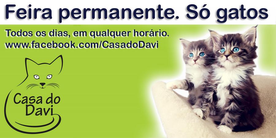 Feira permanente Só Gatos CasadoDavi