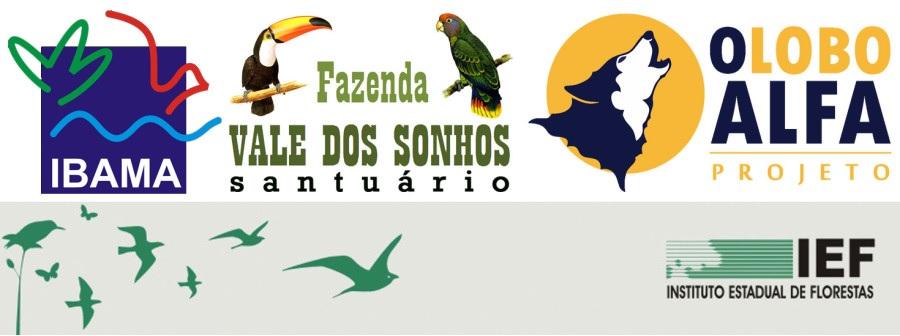 Aves de rapina 11