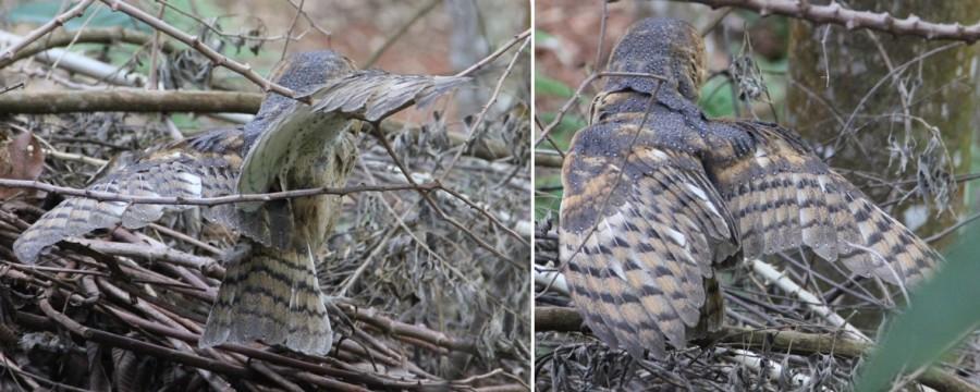 Aves de rapina 3