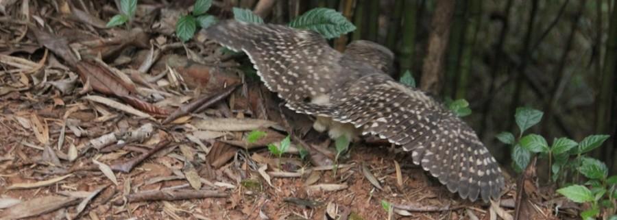 Aves de rapina 9