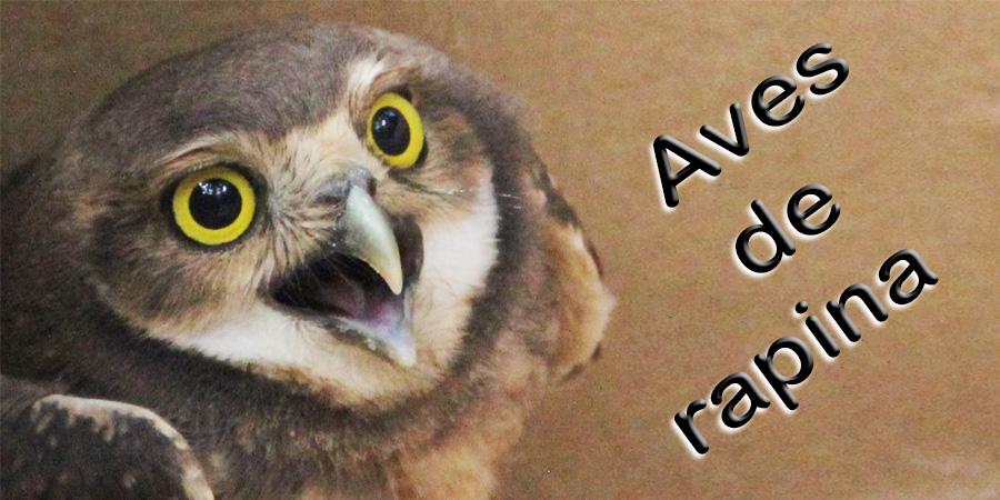Aves de rapina