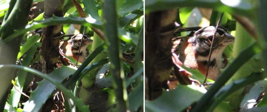 Luidi e Rosinha ninho 2