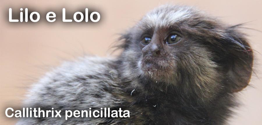 Lilo e Lolo