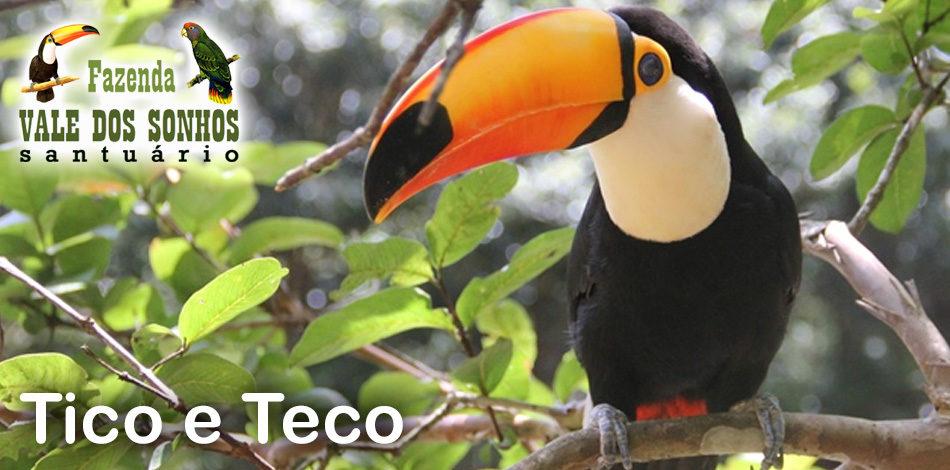 Tico e Teco