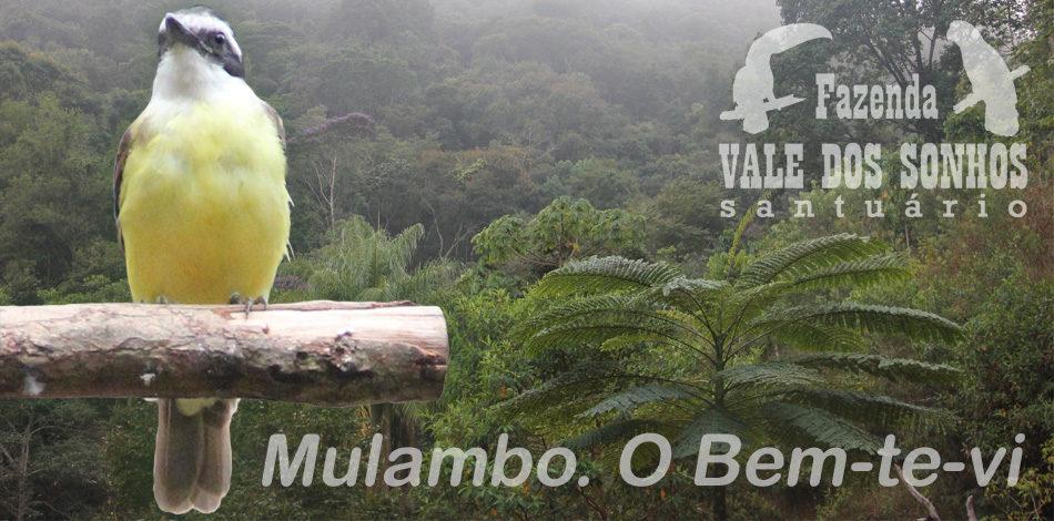 Mulambo