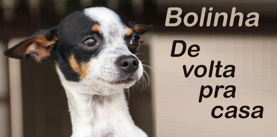Alek Bolinha